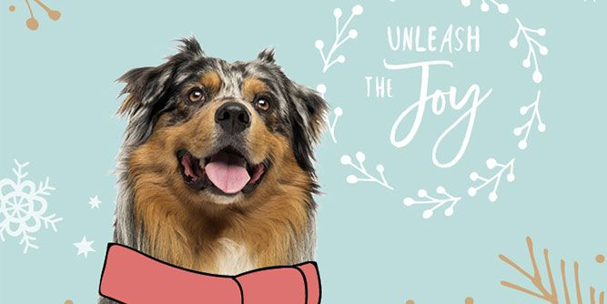 DogTopia - Franchise