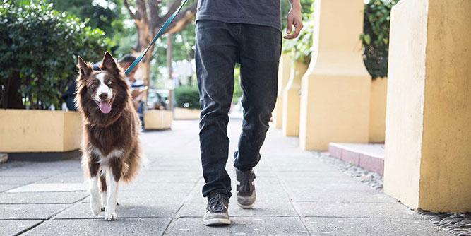 Instinct Dog Training slide 1