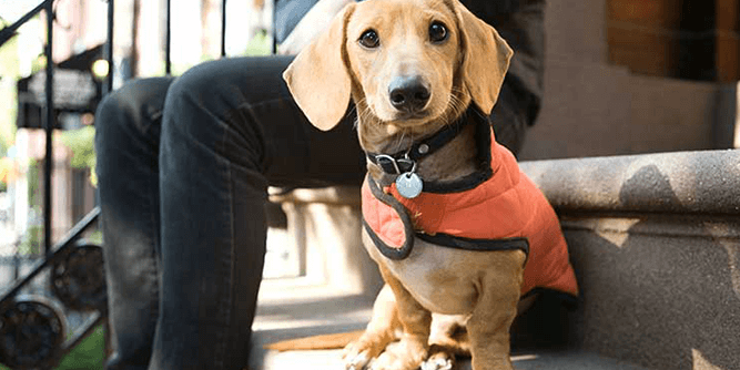 Instinct Dog Training slide 7