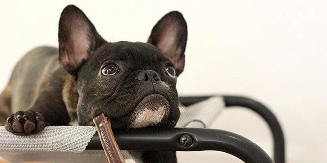 Instinct Dog Training slide 9