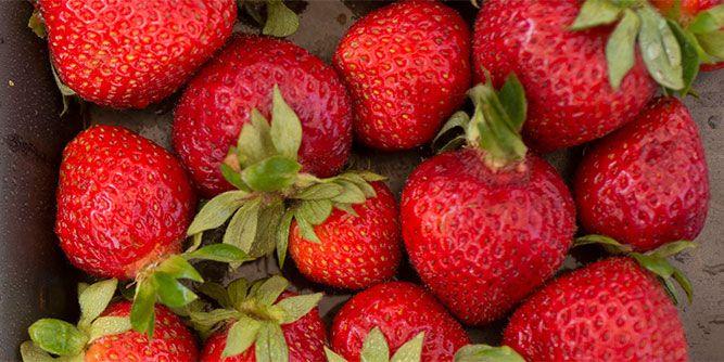Organics Live slide 2