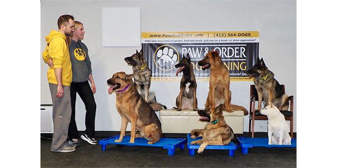 Paw & Order - Dog Training slide 8