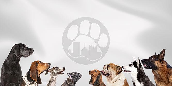 Paw & Order - Dog Training slide 4