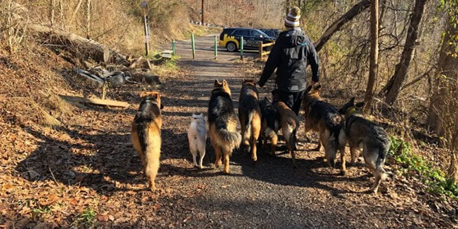 Paw & Order - Dog Training slide 6