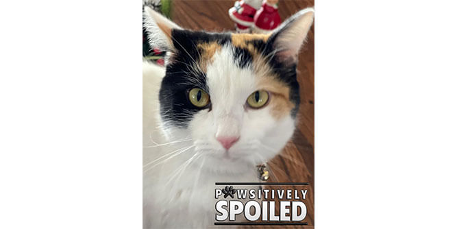 Pawsitively Spoiled Pet Sitting slide 10