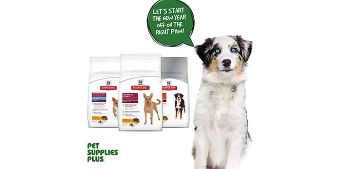 Pet Supplies Plus slide 3
