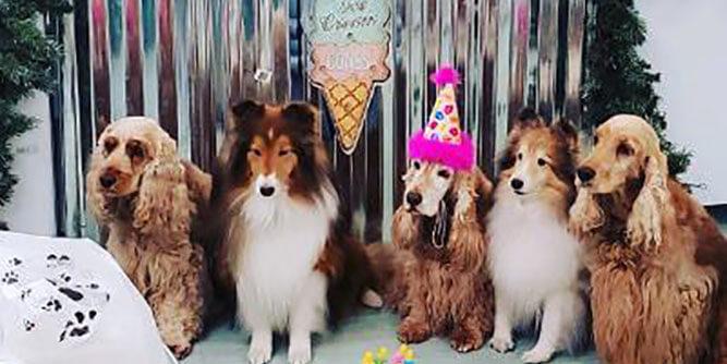 Salty Paws - Dog Friendly Ice Cream Bar slide 1