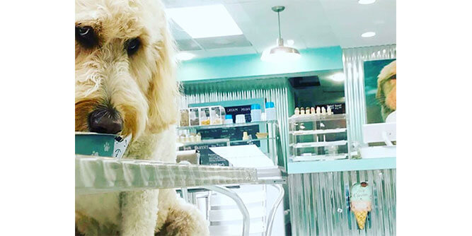 Salty Paws - Dog Friendly Ice Cream Bar slide 4