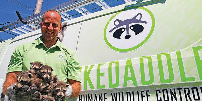 Skedaddle Humane Wildlife Control slide 6