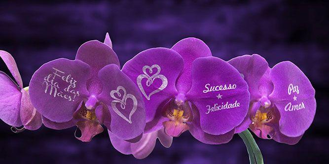 Speaking Roses slide 8