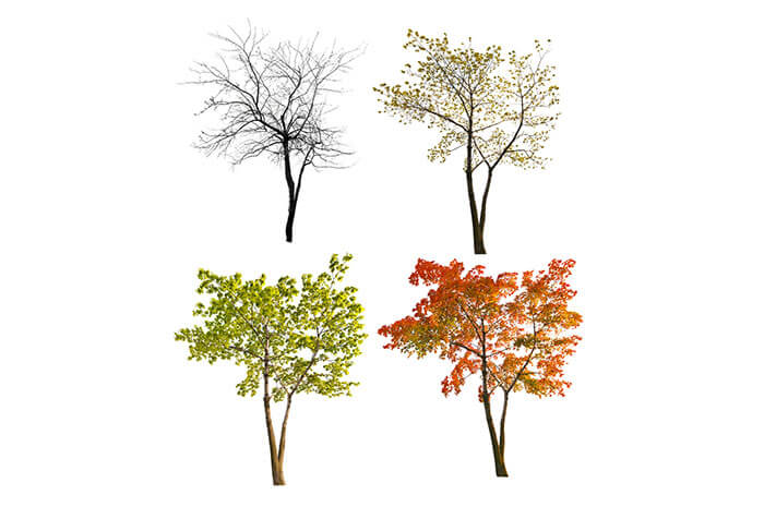 season trees